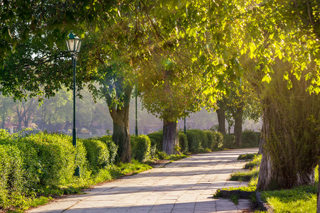 area of ​​the old city park with lantern near bench under japanese cherry tree in sun light