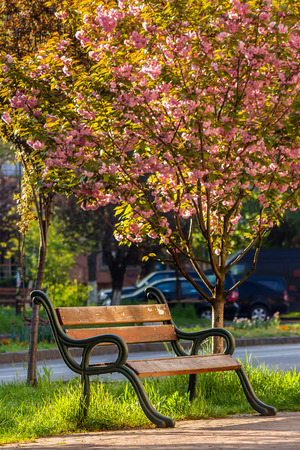 area of the old city park with lantern near bench under japanese cherry tree Stock Photo