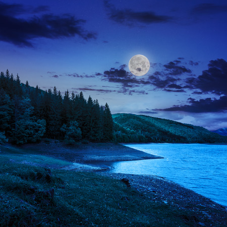 view on lake near the forest with some  pine treesat night on mountain background in moon light