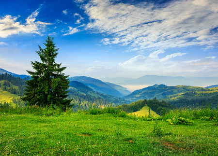 mountain summer landscape. pine tree on hillside on sunrise