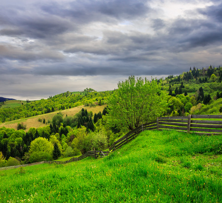 summer landscape. fence on the meadow leading to forest in fog on mountain hillside  on dull rainy day Stock Photo