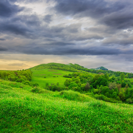mountain summer landscape. trees near meadow and forest on hillside under  sky with clouds on dull day