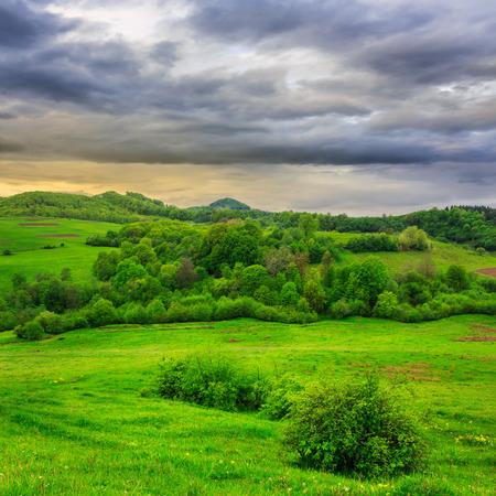 mountain summer landscape.forest near meadow on hillside under  cloudy sky at dull day Stock Photo
