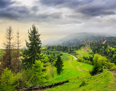 mountain summer landscape. pine trees near meadow and forest on hillside under  cloudy morning sky