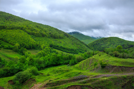mountain summer landscape. trees near meadow and forest on hillside under  sky with clouds