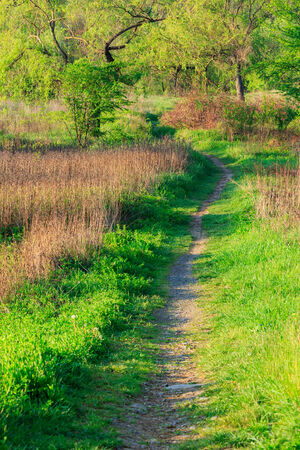 trail with lawn in the shade of trees of green forest Stock Photo
