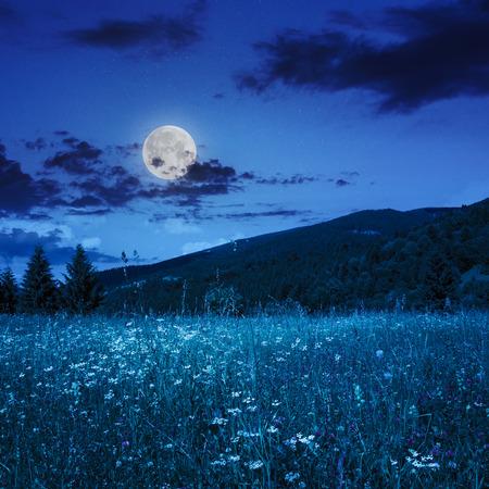 山の夏の風景。草原と雲が月の光で夜の空の下で丘の中腹に森林近くの松の木 写真素材