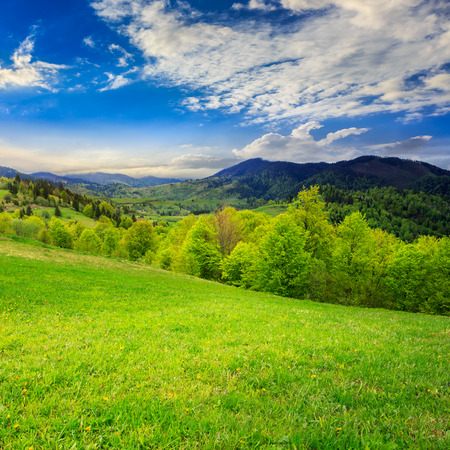 summer landscape. green grass on  hillside meadow. forest in fog on the mountain