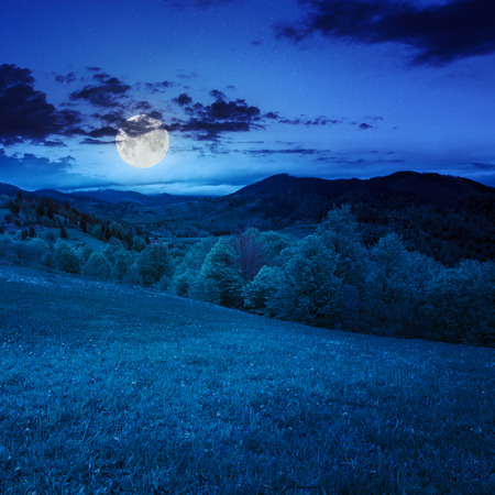 summer landscape. green grass on  hillside meadow. forest in fog on the mountain at night in moon light