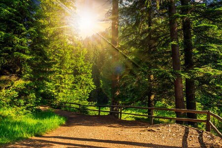 wide trail with a wooden fence near the lawn in the shade of pine trees of green forest at sunset Stock Photo