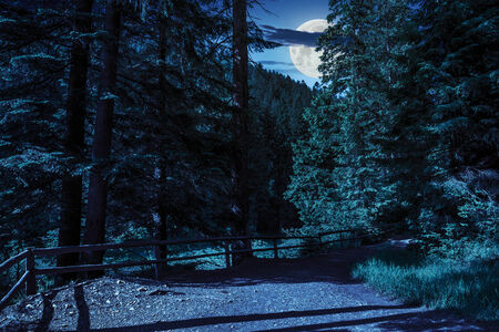 wide trail with a wooden fence near the lawn in the shade of pine trees of green forest at night in moon light