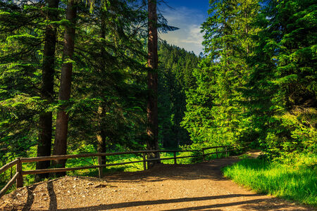 wide trail with a wooden fence near the lawn in the shade of pine trees of green forest
