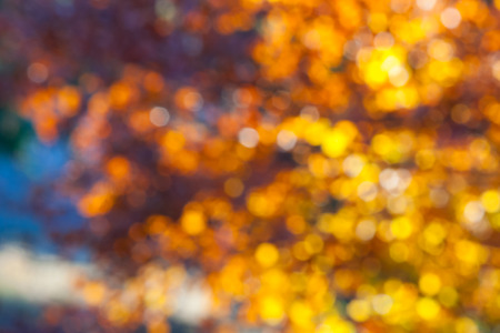 Abstract light blur through the leaves of the tree crown  Stock Photo