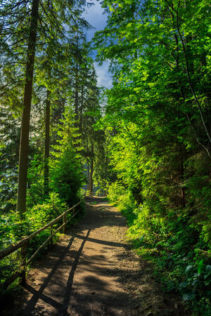 trail with a wooden fence near in the shade of pine trees of green forest
