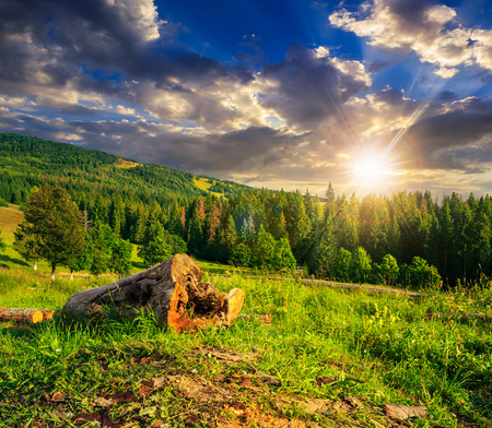 log of an old tree on a hillside near the pine forests in the mountains at sunset Stock Photo