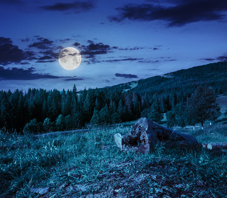 log of an old tree on a hillside near the pine forests in the mountains at night in moon light