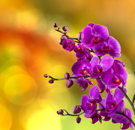 purple orchid flower close up on blurred yellow and red garden background