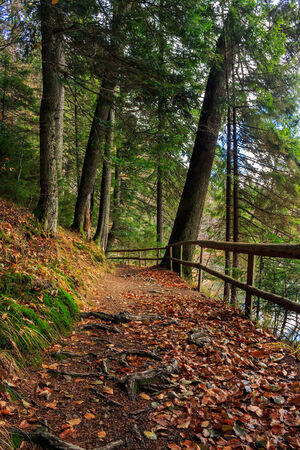 narrow trail with a wooden fence in the shade of pine trees of green forest with foliage
