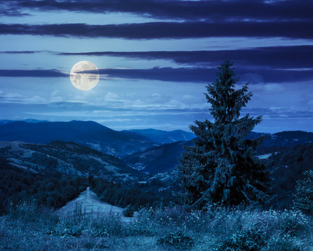 big tree in front of coniferous forest on top of a slope of mountain range at night in moon light Stock Photo