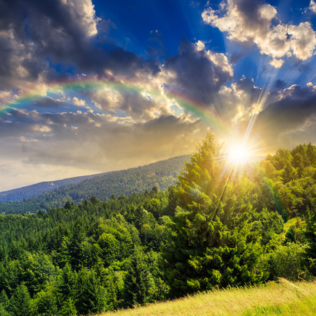 big tree in front of coniferous forest on top of a slope of mountain range at sunset with rainbow