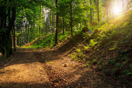 wide trail w near the slope in the shade of trees of green forest at sunset Stock Photo