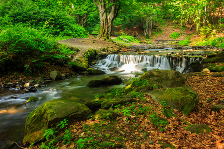 beautiful and clean little cascades in the forest near a huge rock covered with moss Stock Photo