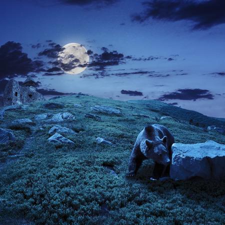 little brown bear walking among white sharp stones near the old castle on the hillside at night in moon light
