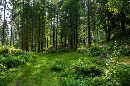 forest glade in the cool shade of the trees on a hot summer day Stock Photo
