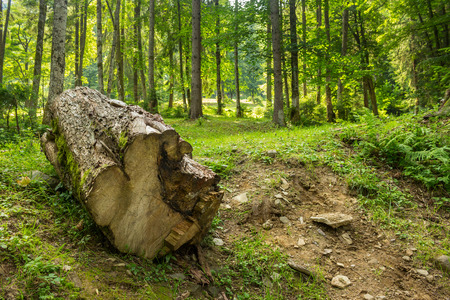 log of an old treein the mixed forests in the mountains