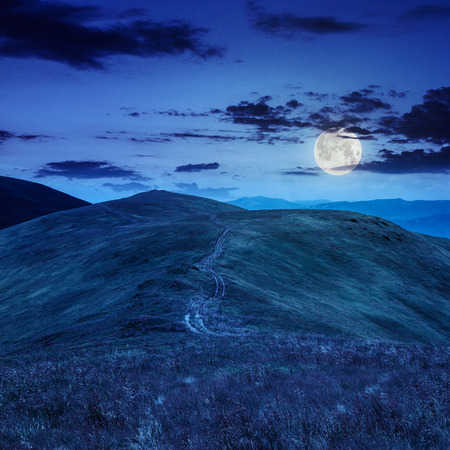high wild grass and and green plant of black berry at the top of the mountain at night in full moon light