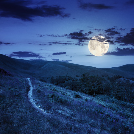 thin path near the lawn with purple flowers  in the shade of trees on a hillside at night in full moon light