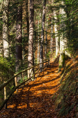thin path with a wooden fence nearit in the shade of pine trees of green forest