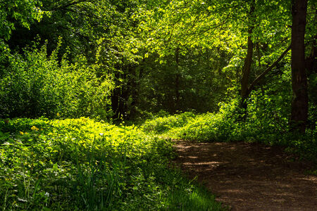 thin trail  near the lawn in the shade of trees of green forest Stock Photo