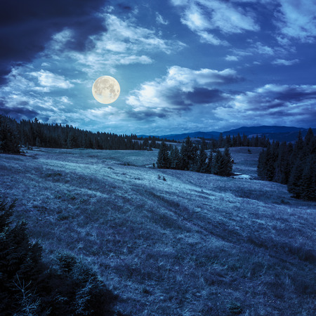 calm summer landscape in mountains. awesome coniferous forest near meadow  on hillside under epic sky with clouds at magic cool blue night in full moon light