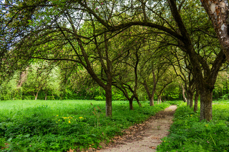 thin trail near the lawn in the shade of fruit trees of green garden