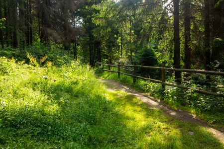 narrow trail with a wooden fence near the lawn in the shade of pine trees of green forest Stock Photo