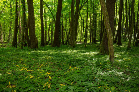 forest glade with flowers in the cool shade of the trees a hot summer day