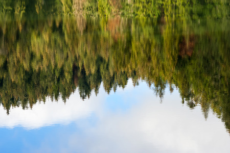 nature abstract background. reflection of autumn coniferous forest   in the rippled water of the river surface