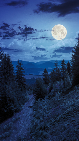 wide trail  near the lawn in the shade of pine trees of green forest in mountains at night in full moon light