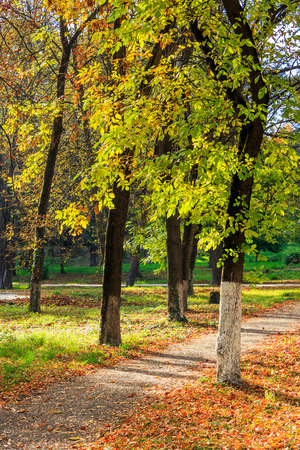 path near the lawn with foliage in the shade of trees of green city pack