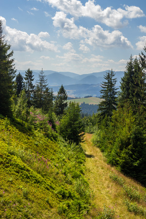wide trail  near the lawn in the shade of pine trees of green forest in mountains