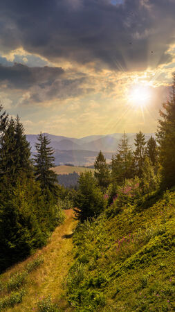 wide trail  near the lawn in the shade of pine trees of green forest in mountains at sunset