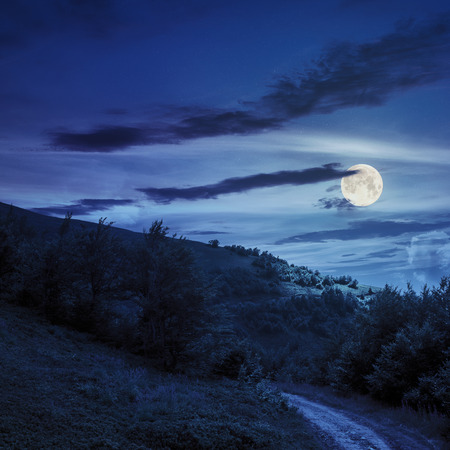 wide trail  near the lawn in the shade of pine trees of green forest at night in full moon light