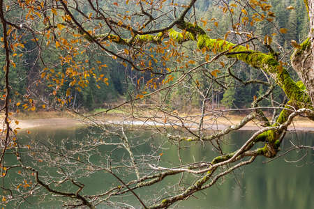 tree branches with autumn foliage on blurred abstract background of forest lake in the mountains photo