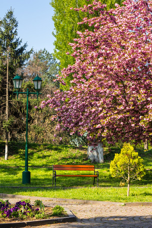 area of ​​the old city park with lantern near bench under japanese cherry tree