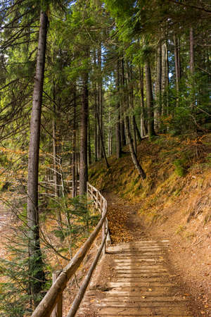 trail with a wooden fence near the lawn in the shade of pine trees of green forest in autumn
