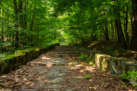 winding path with steps made of stone among the trees in a city park is covered with foliage horizontal