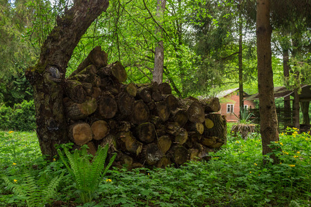 log of an old tree on a garss near the house in forest