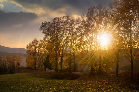 forest glade with foliage in the cool shade of the trees a hot autumn sunset Stock Photo