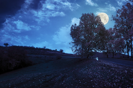 asphalt road  passes through the autumn shaded forest at night in full moon light
